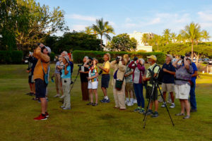 Birdwatching at the Courtyard King Kamehameha Kona Beach Hotel
