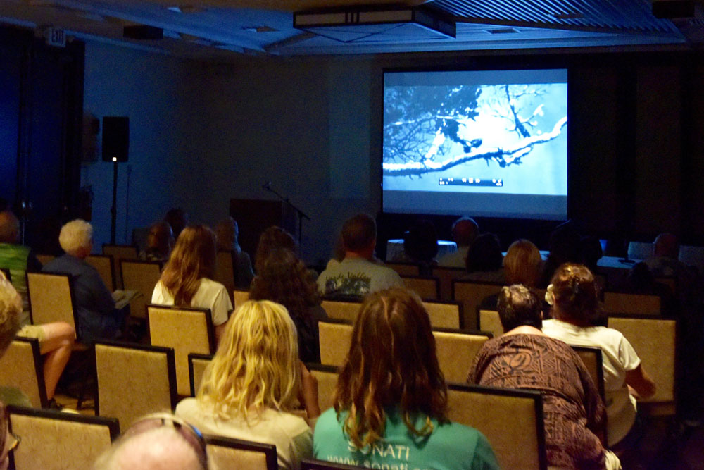 bird festival featured film viewing