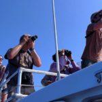 birding by sea