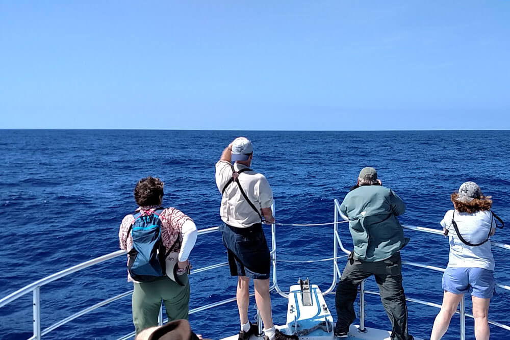 Discover Hawaii's Seabirds by boat on our Kona Coast Pelagic Morning Tour